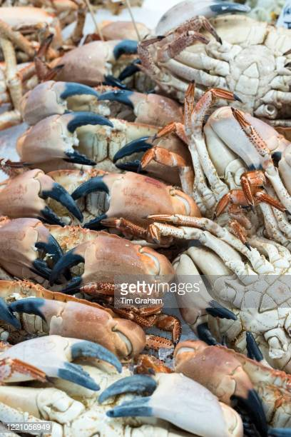 Fresh crabs decapod crustaceans showing crab claws on sale at St Helier Fish Market in Jersey Channel Isles
