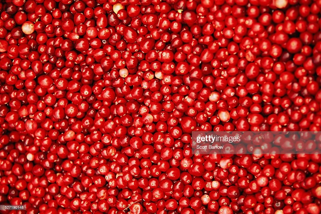 Fresh cranberries : Stock-Foto