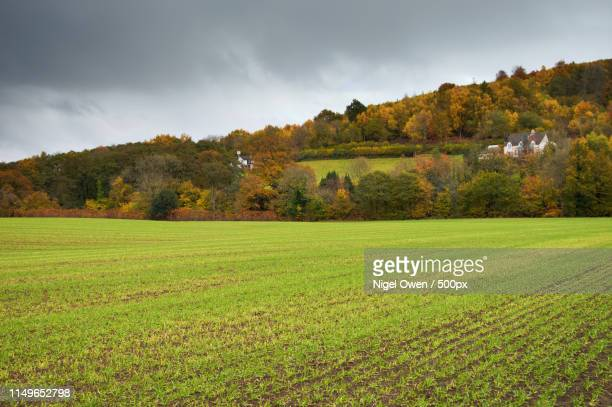 fresh crop - nigel owen stock pictures, royalty-free photos & images