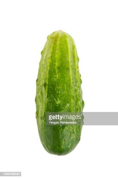 fresh cucumber closeup isolated on white background - pepino fotografías e imágenes de stock