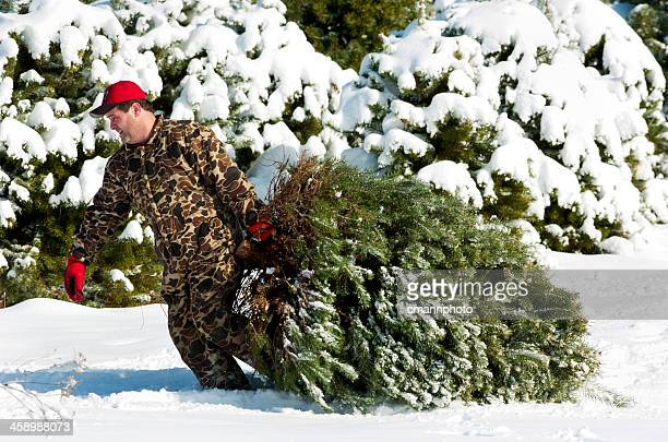 fresh cut christmas tree - cmannphoto stock pictures, royalty-free photos & images