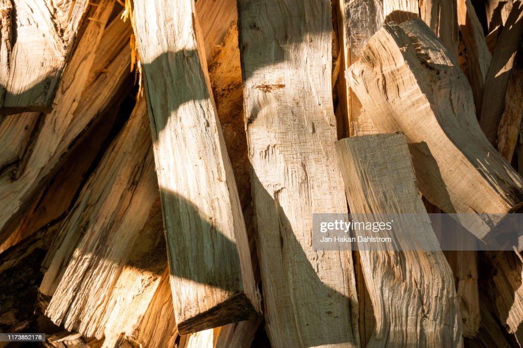 Fresh cut firewood : Stock Photo