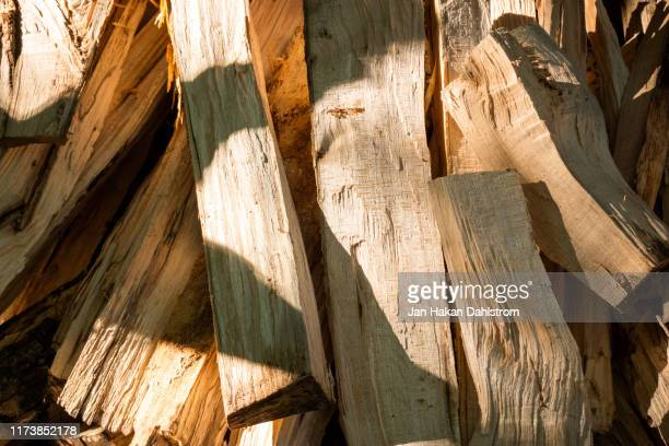 fresh cut firewood - firewood stock pictures, royalty-free photos & images