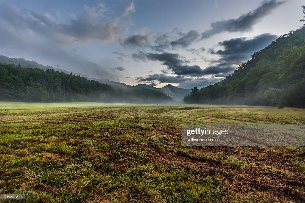 Fresh Cut Grass in Foggy Valley : Stock Photo