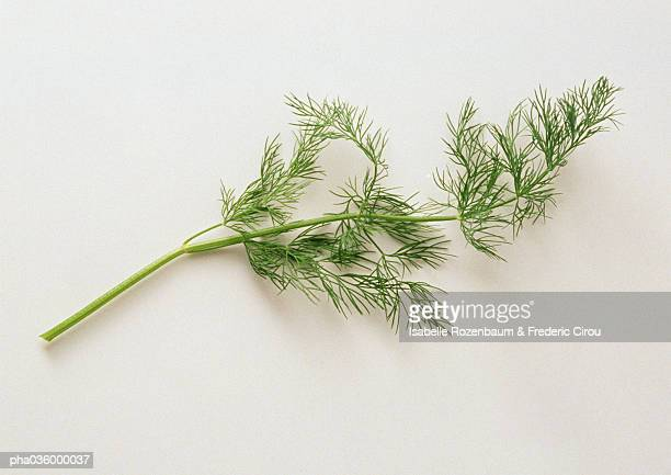 Fresh dill, close-up, white background