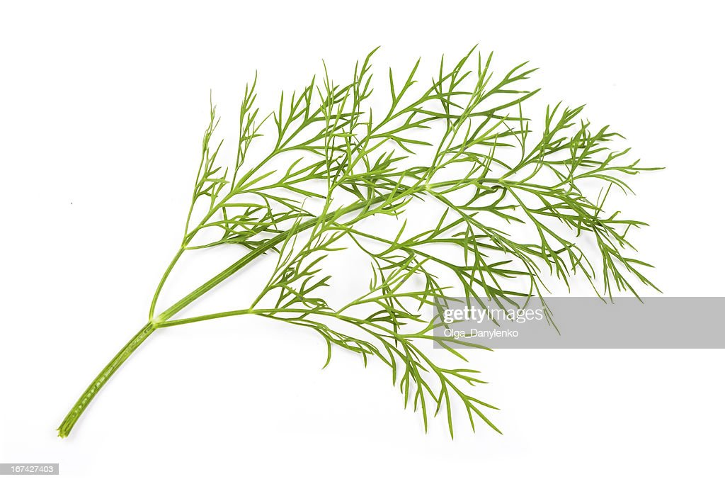 Fresh dill : Stock Photo