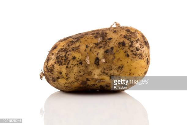Fresh dirty potato isolated on a white background.