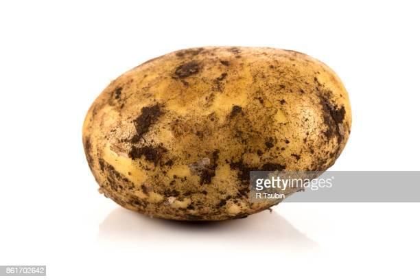fresh dirty potato - prepared potato stock pictures, royalty-free photos & images