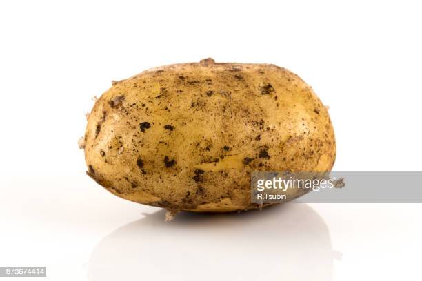 Fresh dirty potato