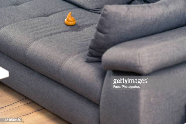 fresh dog droppings on furniture - defecare foto e immagini stock