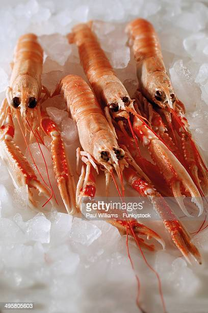 Fresh Dublin Bay prawns on crushed ice