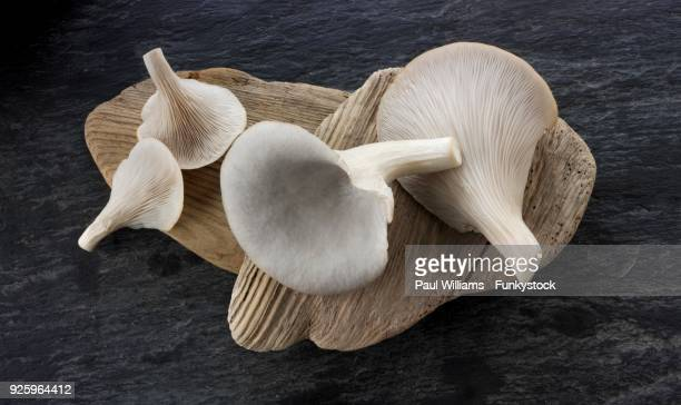 Fresh edible grey oyster mushrooms (Pleurotus)