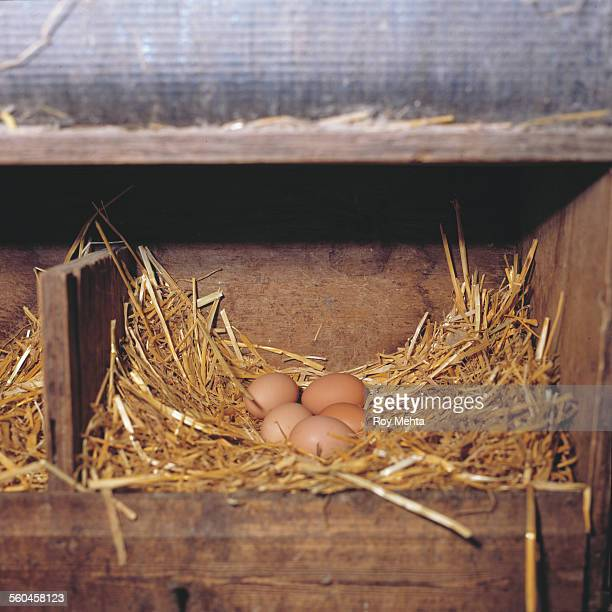 fresh eggs on organic farm - chicken coop stock pictures, royalty-free photos & images