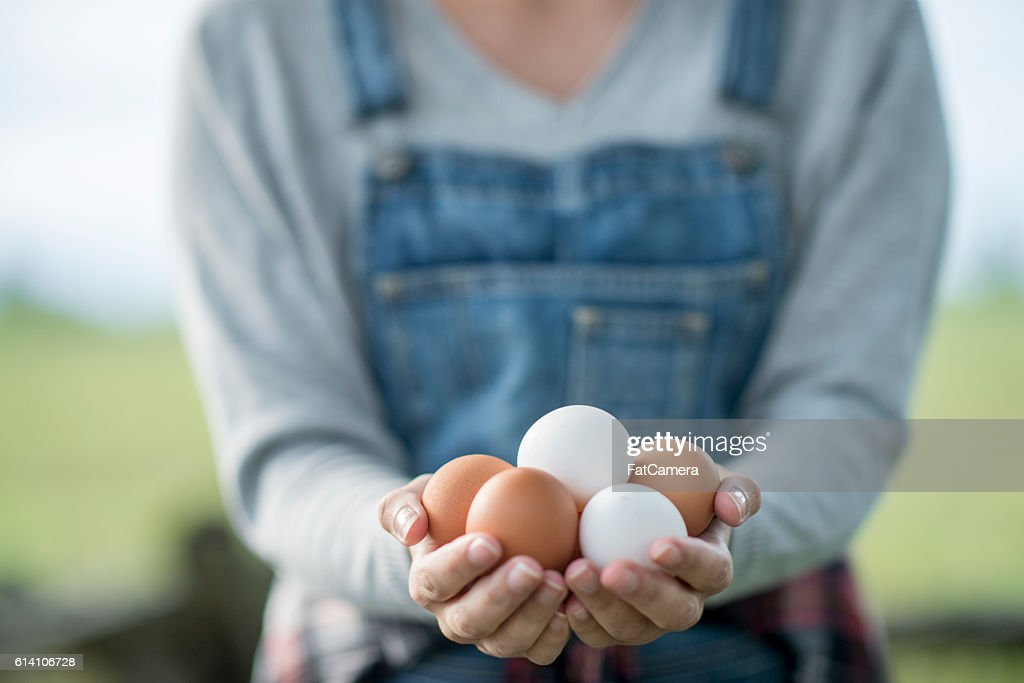 Fresh Eggs : Stock Photo