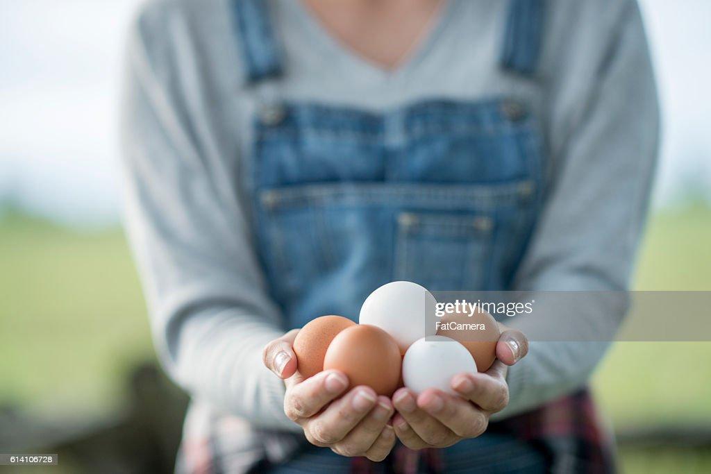 Ovos frescos preparado na hora : Foto de stock