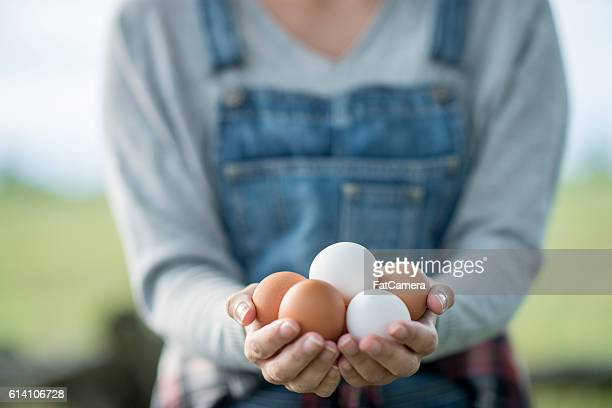 fresh eggs - organic farm stock pictures, royalty-free photos & images