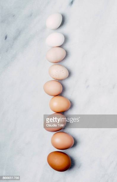 fresh eggs - animal egg stock pictures, royalty-free photos & images