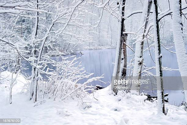 fresh fallen snow at green lakes state park, ny - ogphoto stock pictures, royalty-free photos & images