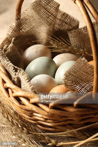 fresh farm breakfast eggs