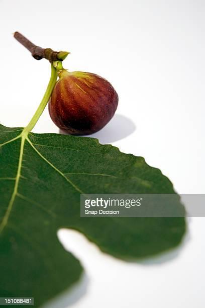 Fresh fig and leaf
