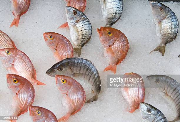 fresh fish a leaping - piraeus stock pictures, royalty-free photos & images