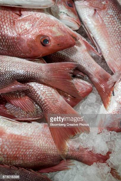 Fresh fish are displayed for sale inside a fish market