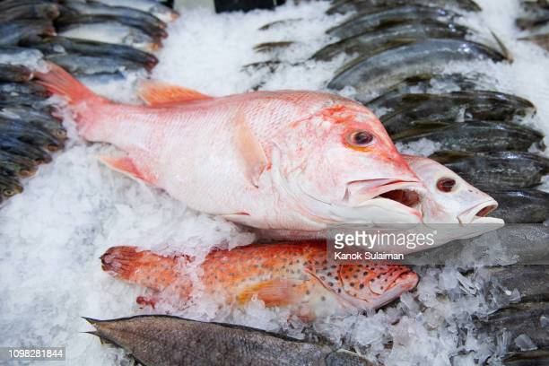fresh fish at a market - catch of fish stock pictures, royalty-free photos & images