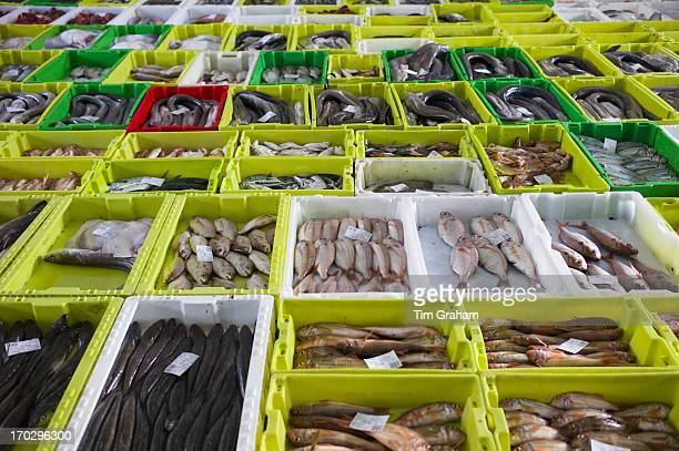 Fresh fish at Confradia de Pescadores de Luarca Confederation of Luarca Fishermen at Puerto Luarca in Asturias Spain