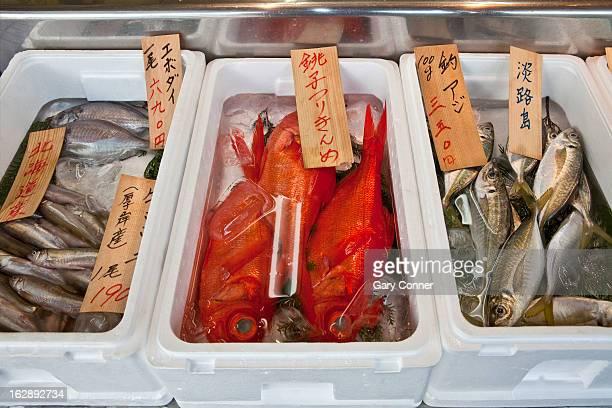 Fresh fish at market in Japan