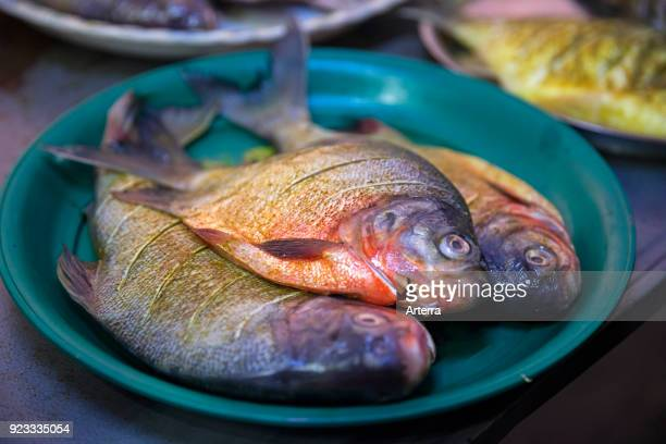 Fresh fish at market in Mawlamyine Mawlamyaing Mon State Myanmar Burma