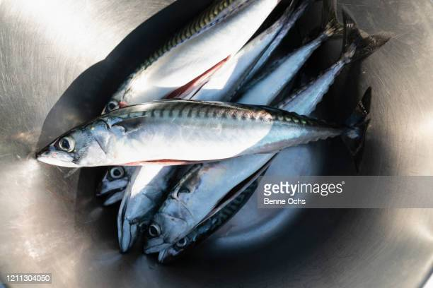 fresh fish in stainless steel bowl - catch of fish stock pictures, royalty-free photos & images