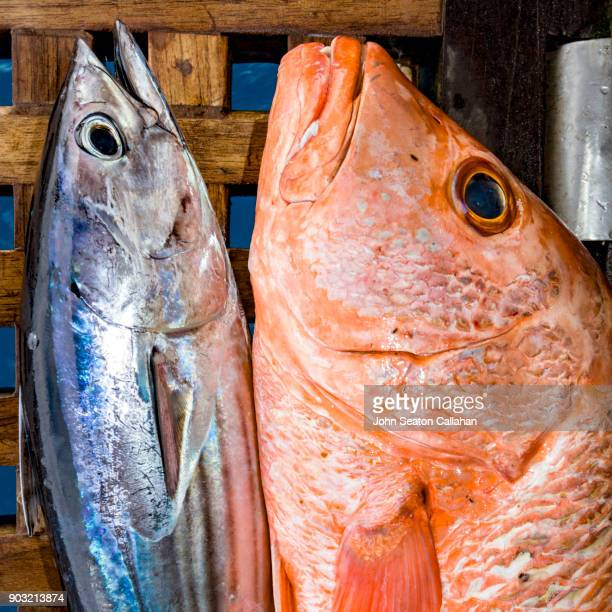 Fresh Fish in the Mentawai Islands