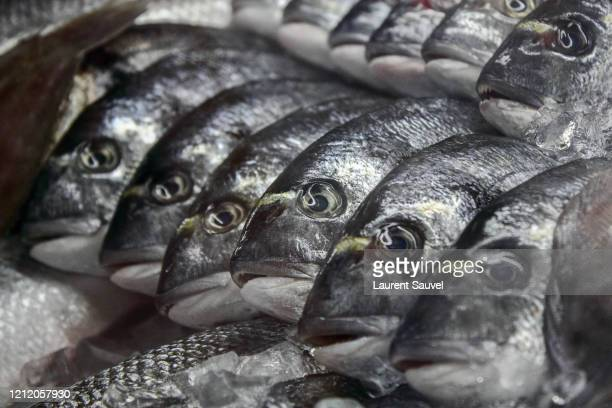 fresh fish on a market stall in portugal - laurent sauvel photos et images de collection