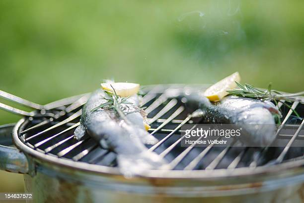 Fresh fish on BBQ grill