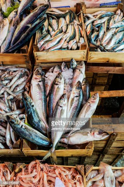 fresh fish on display at market stall, palermo, sicily, italy - palermo sicily stock photos and pictures
