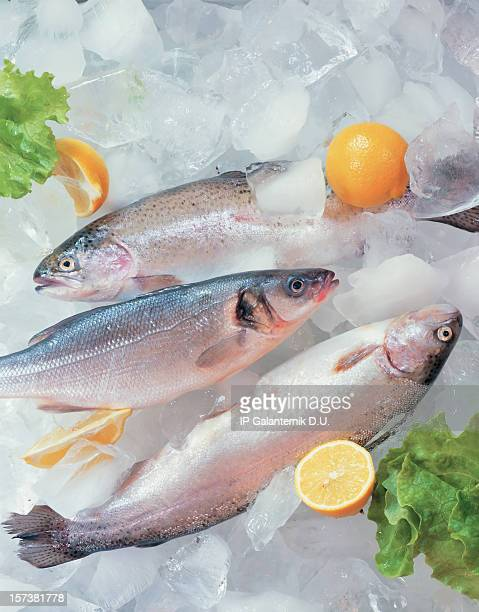 Fresh fish on ice decorated with greens