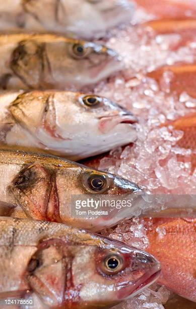 Fresh fish on ice in market stall