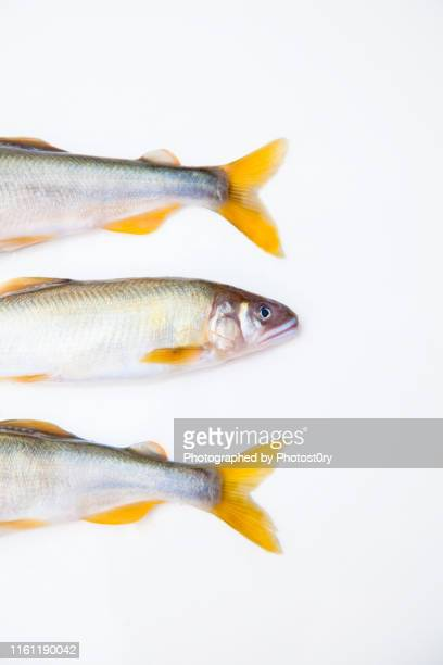 fresh fish - catch of fish stock pictures, royalty-free photos & images