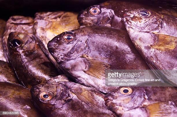 fresh fish - gregoria gregoriou crowe fine art and creative photography 個照片及圖片檔