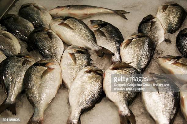 fresh fish (tsipoura) - gregoria gregoriou crowe fine art and creative photography stockfoto's en -beelden