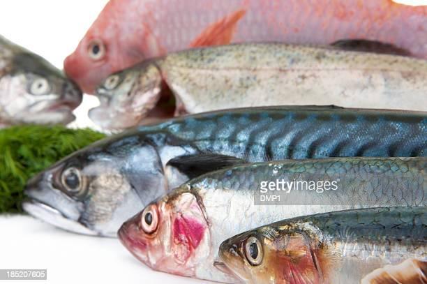 Frische Fischarten hohen Anteil von Omega - 3 für gesundes Essen