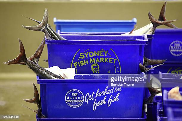 Fresh fish stored in containers sits at the Sydney Fish Market on December 23 2016 in Sydney Australia The Sydney Fish Markets experiences its...
