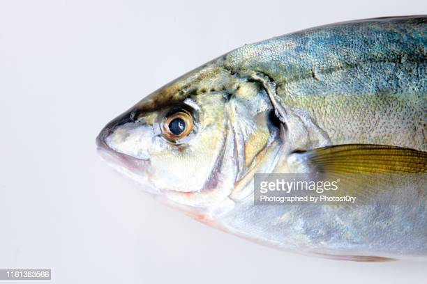 fresh fish - white background - fatty acid stock pictures, royalty-free photos & images