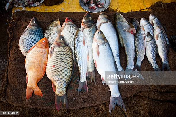 Fresh fishes for sale in Indian Market