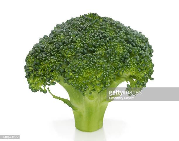 Fresh floret of organic broccoli