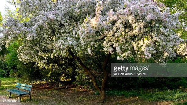 fresh flowers on tree - erlangen stock photos and pictures