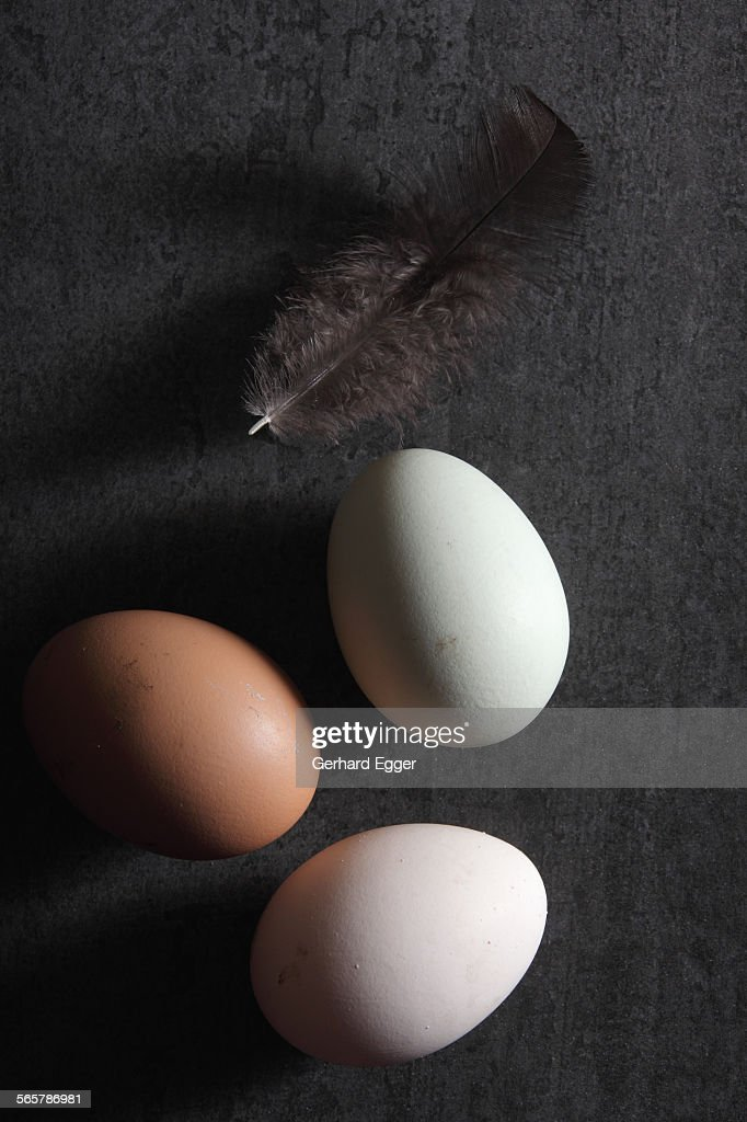 Fresh freerange eggs : Stock Photo