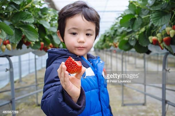 fresh fruit - peter lourenco stock-fotos und bilder