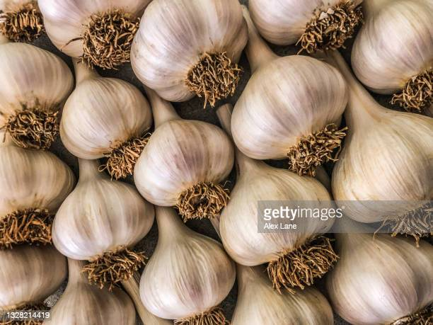 fresh garlic al carte - ニンニク一片 ストックフォトと画像