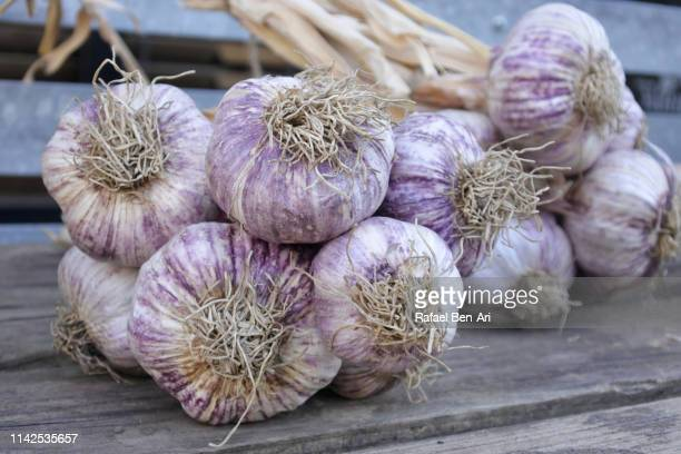 fresh garlic plants - rafael ben ari stock pictures, royalty-free photos & images
